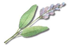 Epidermis & Sage Skin Solutions